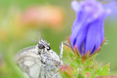 Butterfly on summer flower with shallow depth — Stock Photo