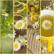 Collage with camomile — Stock Photo