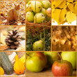 Stock fotografie: Autumn collage