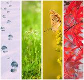 Four seasons collage — 图库照片