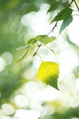 Bright green leaves — Stock Photo