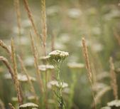 Autumn flowers background — Stock Photo