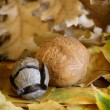 Stock Photo: Autumn leaves and walnut.