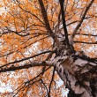 Autumn tree — Photo #30075857