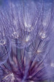 Abstract colorful dandelion seeds — Stock Photo