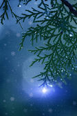 Pine branches Christmas lights — Stock Photo