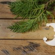 Christmas fir tree with decoration moon — Stockfoto