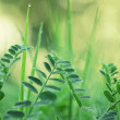 Stock Photo: Gentle green leaves