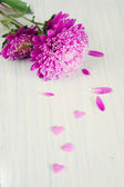 Gentle pink flower and hearts — Stock Photo