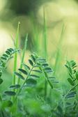 Gentle green leaves — Stock Photo