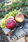 Autumn nature. Fall fruit on wood. — Stock Photo