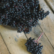 Stock Photo: Elderberry (Sambucus ebulus) fruit