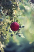 Red Christmas baubles on tree — Stock Photo