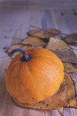 Ripe pumpkin on table — Stock fotografie