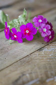 Gentle pink flower on table — Stock Photo