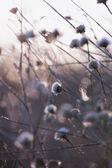 Pastel tones Spring blossom macro — Stock Photo