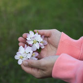 Woman holding spring blossoms — Stock Photo