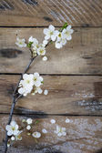 Spring branch on table — Stock Photo