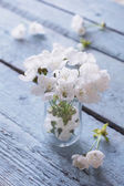 White cherry blossoms in a Vase — Stock Photo
