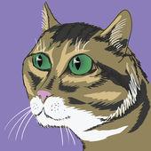 Cute cat — Foto de Stock