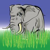 Elephant — Photo