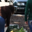 People sort through fresh vegetables at Farmer's market — Vídeo Stock
