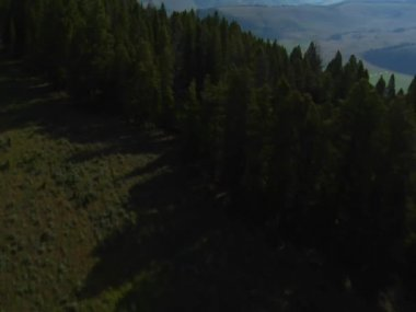 Aerial shot low over trees — Stock Video
