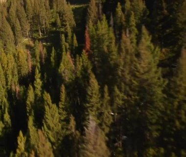Aerial shot of forest and mountainside — Stock Video