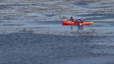 Kayakers lounge in a kelp bed on the sea — Stock video