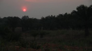 African sunset with fiery pink orb — Vídeo de Stock
