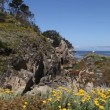 Point Lobos State Park California — Stock Video