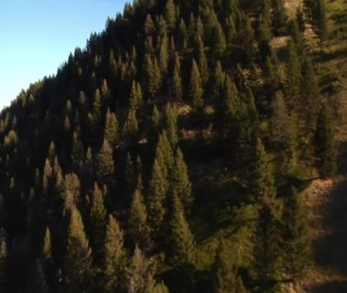 Aerial passby shot of forest and mountainside — Stock Video