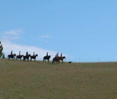 Aerial strzał kowbojów sylwetka na grzbiet — Wideo stockowe