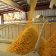Cornflakes load into container — Stock Video