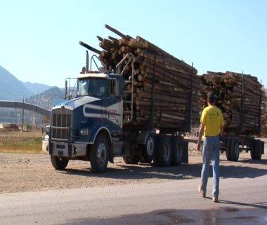 Truck driver returns to log truck — Stock Video