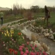 Jib up past tulips to ladies in park — Stock Video