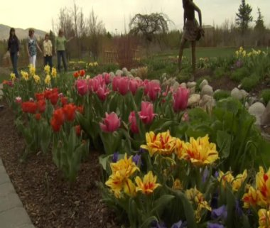 Ladies admire tulips in Park — Stock Video