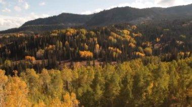 Las i góry — Wideo stockowe