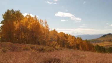 Mountain meadow with yellow aspens — Stock Video