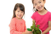 Smiling girls with plant — Stock Photo