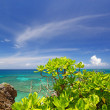 Summer sky and the green of the Okinawa subtropical plants — Stock Photo