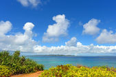 Blue sky and subtropical plants of Okinawa — Stock Photo