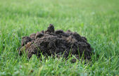 Mole hills — Stock Photo