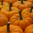 Pumpkins — Stock Photo #18494751
