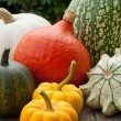 Pumpkins — Stock Photo #18495103