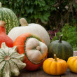 Pumpkins — Stock Photo #18495201