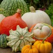 Pumpkins — Stock Photo #18495239