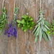 Fresh herbs - Stock Photo