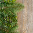 Stock Photo: Fir and holly