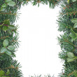 Stock Photo: Fir holly